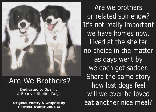 Are We Brothers Poetry & Art by Patricia Walter
