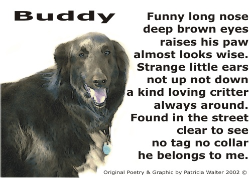 Buddy Poetry & Art by Patricia Walter