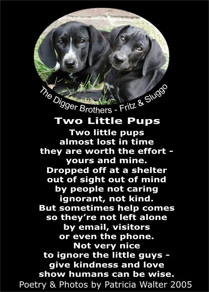 Two Little Pups Poetry & Art by Patricia Walter
