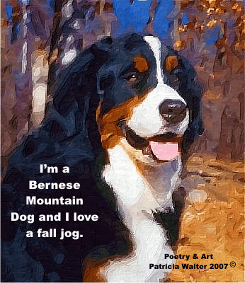 Bernese Mountain Dog  - I'm a Bernese Mountain Dog and I love a fall jog.